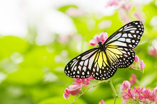 Allergiframkallande växter